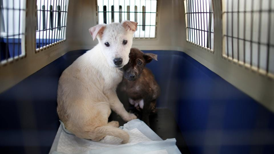 Inhumane practices at pet farms are a cause for concern.