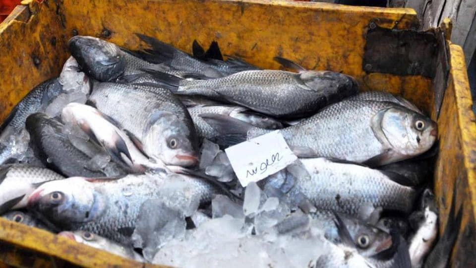The Bihar health department has banned sale, transport and storage of fish in the Patna municipal area for the next 15 days after a test revealed presence of harmful chemicals in samples (Representative Photo)