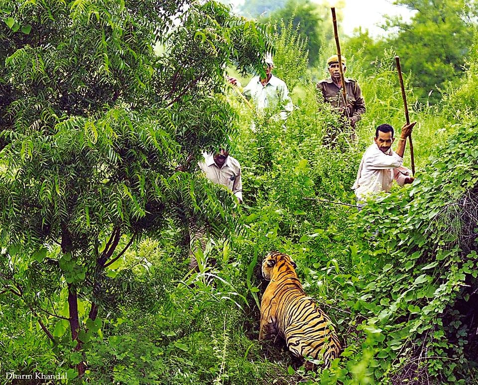Government approves Rs19 17cr plan to reduce man-animal