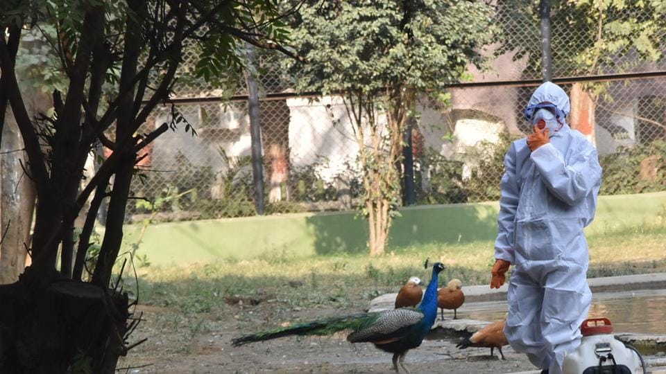 Patna zoo is safe now: Set to reopen next week, bird flu ruled out