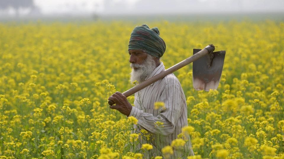 According to a report by Bloomberg, the Central government is considering a plan to transfer cash to farmers instead of offering subsidies on various agricultural inputs. Finance Minister Arun Jaitley had budgeted 701 billion rupees for farm subsidies in the year ending March 31. (PTI)