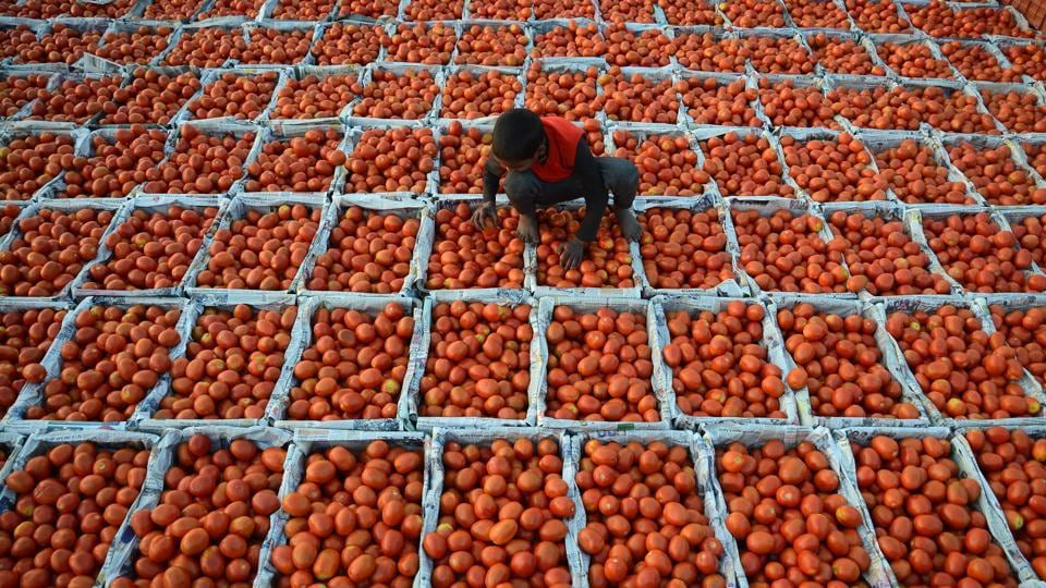 A young boy working at a wholesale vegetable market sorts through tomatoes in Jalandhar, Punjab. (Shammi Mehra / AFP)