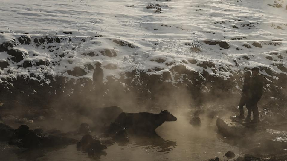 Water buffaloes bathe in a hot spring near the village of Budakli. The hot springs help keep the animals clean as they go through the winter. In the summer, the buffaloes swim in the cool waters of the plains. (Emrah Gurel / AP)