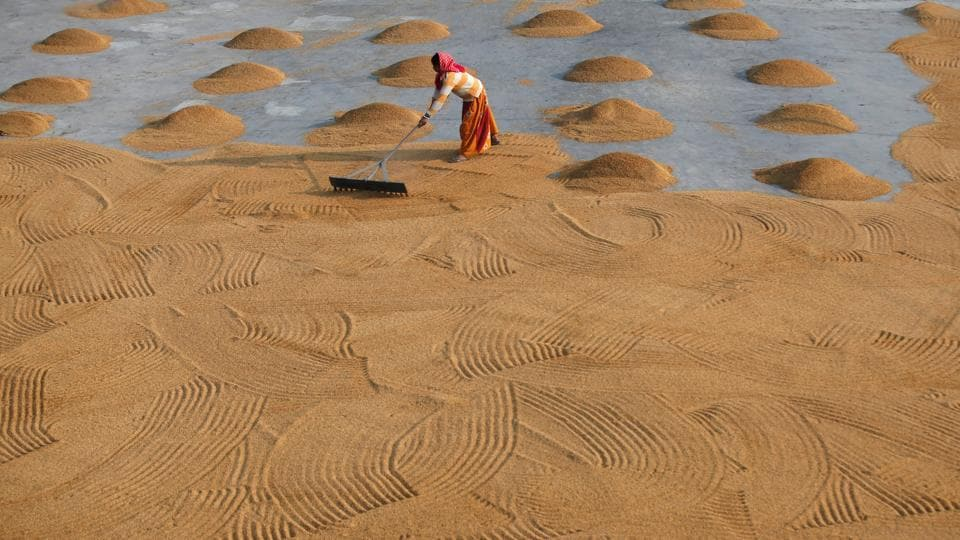 A worker spreads rice for drying at a rice mill on the outskirts of Kolkata, West Bengal. (Rupak De Chowdhuri / REUTERS)