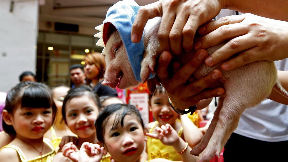 Girls react to a squealing Teacup pig, a rare pet in the country, at the start of celebrations leading to the Chinese New Year at Manila's Lucky Chinatown Plaza in Manila, Philippines. This year is the Year of the Earth Pig on the Lunar calendar and is supposed to represent abundance, diligence and generosity. (Bullit Marquez / AP)