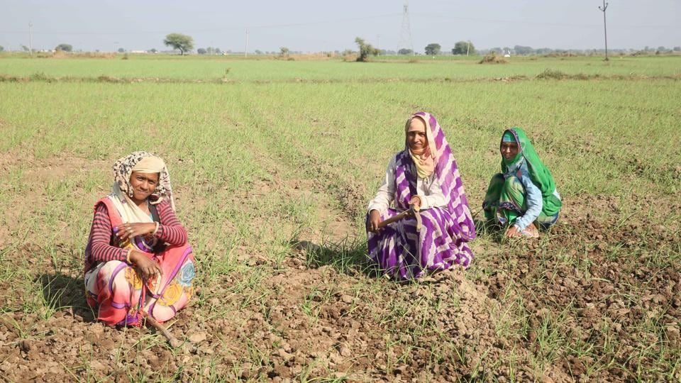 Farmers in Rajasthan have taken loans from around 25 scheduled and nationalised banks and 12 regional rural banks.