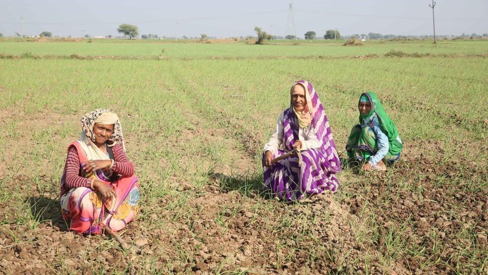 farm loan waiver in rajasthan,ashok gehlot govt,legal panel for loan waiver