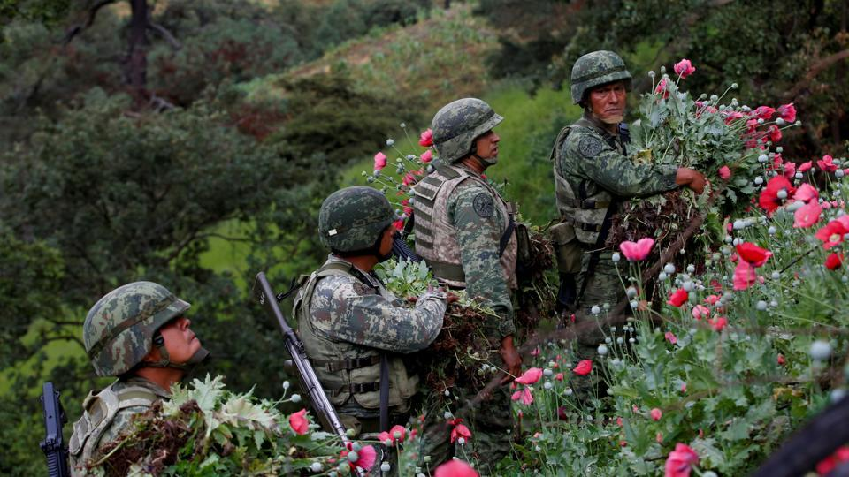 Soldiers cut opium poppies as they destroy a field of illegal plantation in the Sierra Madre del Sur, in the southern state of Guerrero, Mexico. The area of Mexico that illegally farms opium poppies grew by more than one-fifth last year, to an area of 30,600 hectares, according to a UN-backed study published in November. (Carlos Jasso / REUTERS)