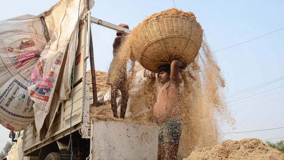 A labourer carries a load of wheat straw on his head to be used for animal feed on the outskirts of Jabalpur, Madhya Pradesh. (Uma Shankar Mishra / AFP)