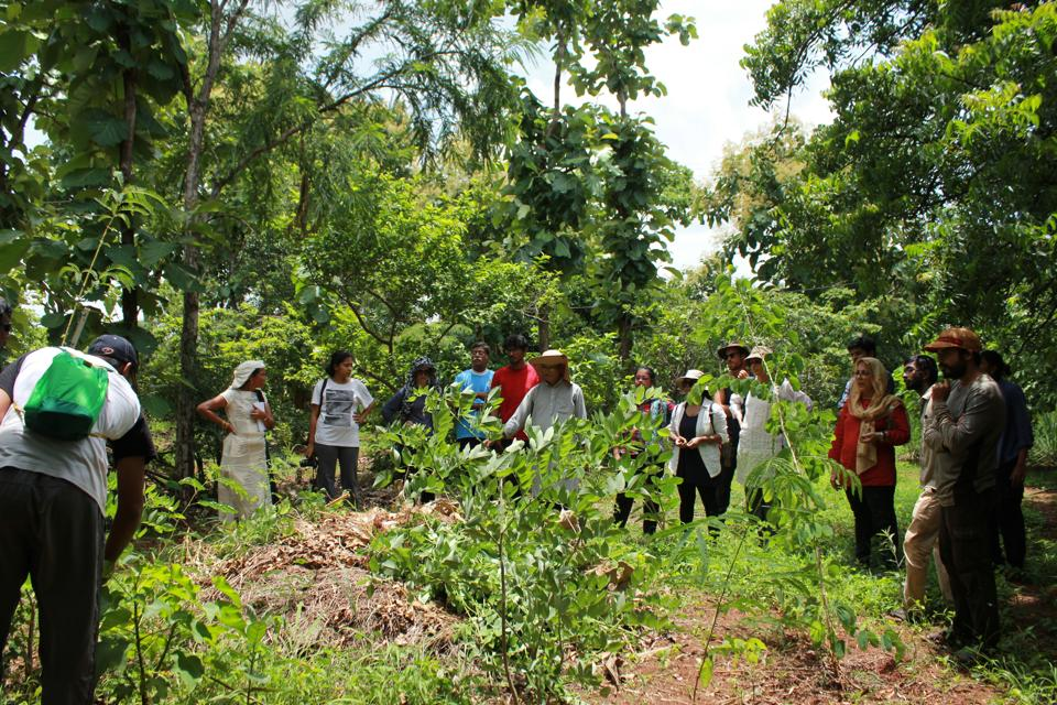Permaculture,Food forest,Wilderness
