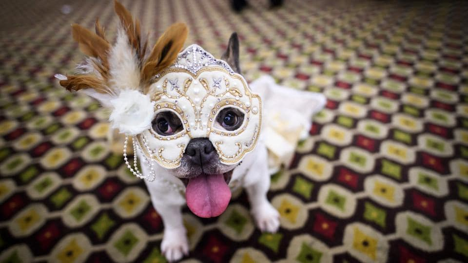 A dog dressed up for the international masquerade category seen backstage at the 16th annual New York Pet Fashion Show in Manhattan. (Johannes Eisele / AFP)