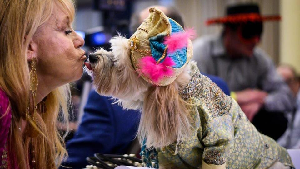 An owner kisses her dog, dressed up for a show, during the 16th annual New York Pet Fashion Show on February 7, 2019 in New York City. (Photo by Johannes EISELE / AFP)