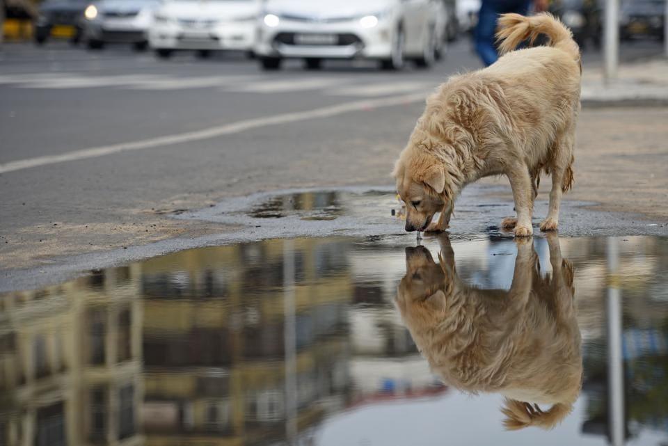 Mumbai,Maharashtra,Straydogs