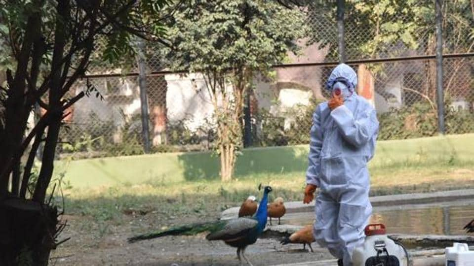 Jharkhand on alert as sample tests positive for bird flu