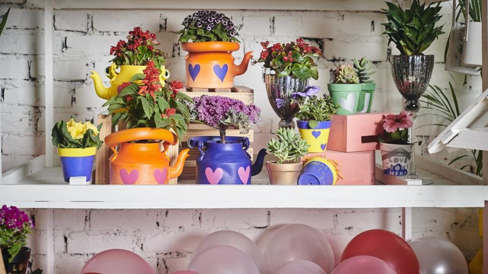 Valentine's Day 2019: We've come up with a variety of options that cater to everyone's interests. May the best gift win! (In Pic) Project Co has different kind of planters which can be gifted for Valentine's.