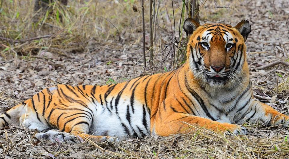 Researchers used computer simulations to assess the future suitability of the low-lying Sundarban region for tigers and their prey species.