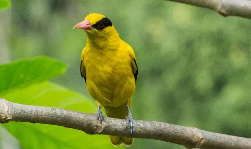 Mumbai,birds,habitat