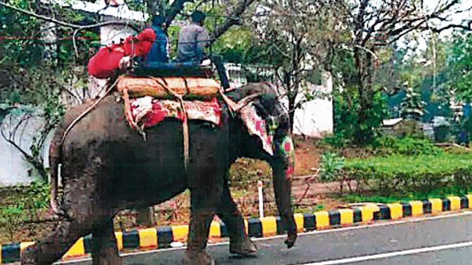 Flipboard Melania Pets An Elephant Kinda