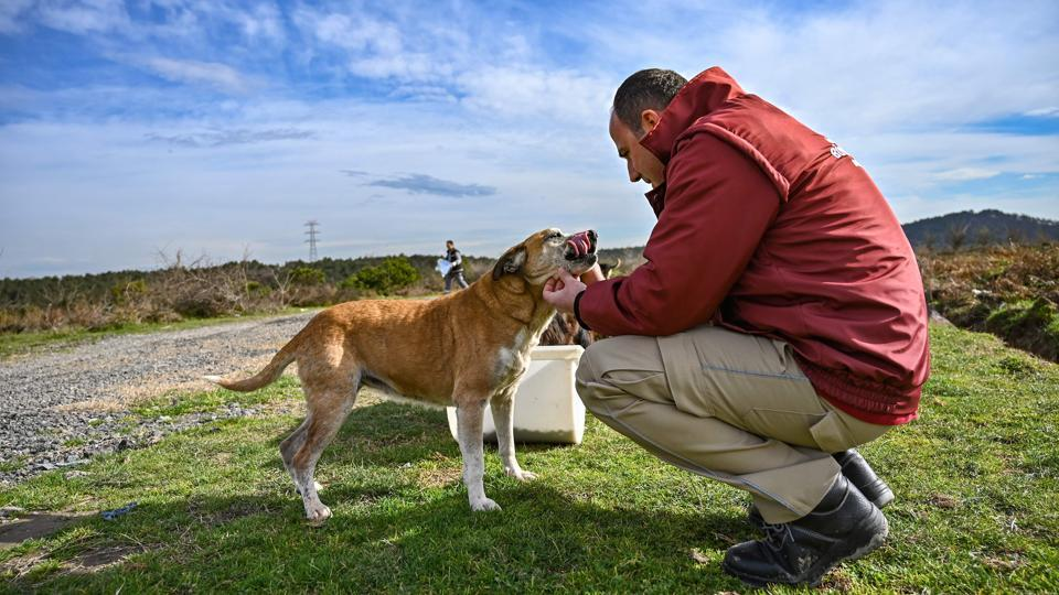 A veterinarian of Istanbul Metropolitan Municipality checks stray dogs as workers feed them at Sariyer, northern Istanbul. Officials in the city are increasing efforts to ensure the good health of the street animals, and thereby of the residents who come into contact with them. (Ozan Kose / AFP)