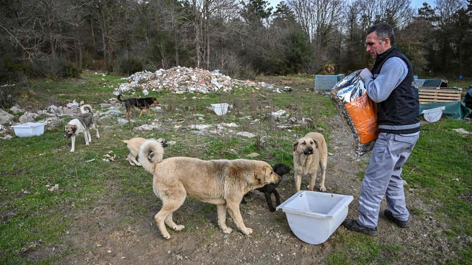 "A worker of Istanbul metropolitan municipality feeds stray dogs at Sariyer, northern Istanbul. ""People generally bring the animals that they take care of... so that they are given anti-parasite"" treatment, said Nihan Dincer, a veterinarian working for the Istanbul Metropolitan Municipality (IBB). And ""because people are in constant contact with them, they are also protected"", she added. (Ozan Kose / AFP)"