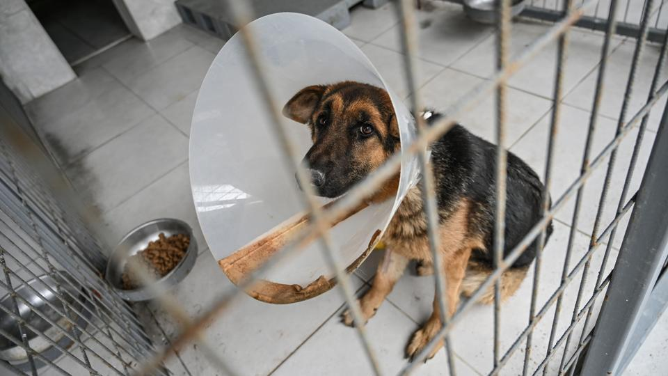 A stray dog is pictured at Sultangazi Health Centre at Sultangazi in western Istanbul.  An animal protection law passed in 2004 forced municipalities to take care of street animals. In Istanbul, as well as the mobile clinic, IBB maintains six health centres. The aim is to vaccinate, sterilise and take care of around 1,30,000 dogs and 1,65,000 cats who live on the streets, according to the municipality. (Ozan Kose / AFP)