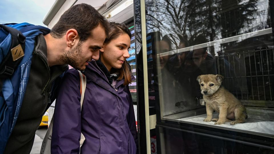 "People look at a puppy presented in a showcase on a Vetbus for adoption at Rumelihisari district in northern Istanbul. While animals living on Istanbul's streets are often well fed, in the forests surrounding the city, ""animals don't have a place to feed themselves,"" Umut Demir, a veterinarian at IBB, said. So around a tonne of food is distributed each day by vans dispatched full of dry food which is consumed by the dogs. (Ozan Kose / AFP)"