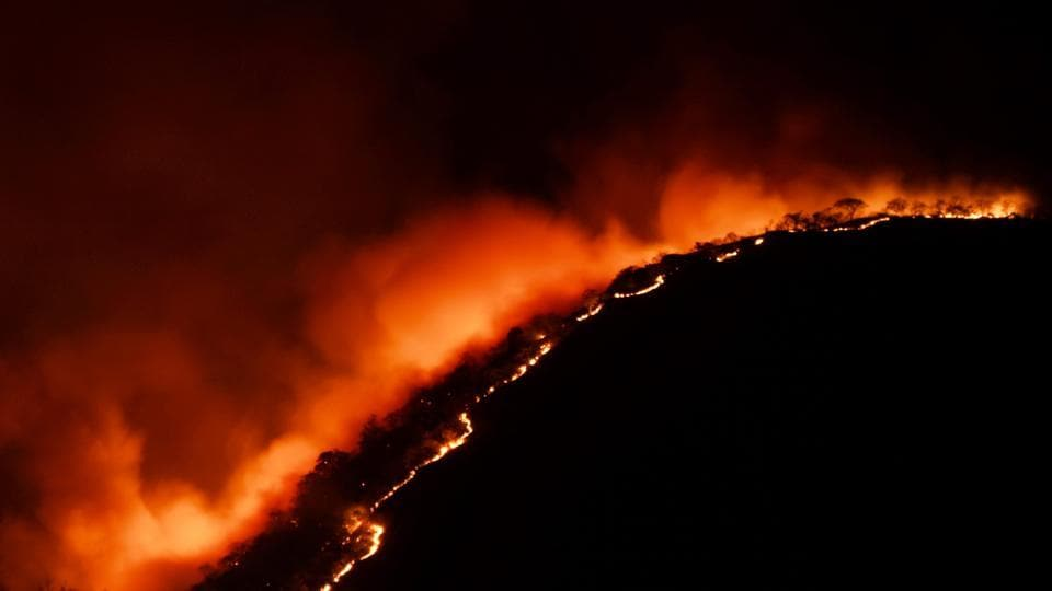 More than 1,500 hectares of the Bandipur tiger reserve, spread across the Kundakere, Bandipur and Gopalaswamy Betta ranges, were engulfed in flames, with strong winds helping the fire spread out of control.