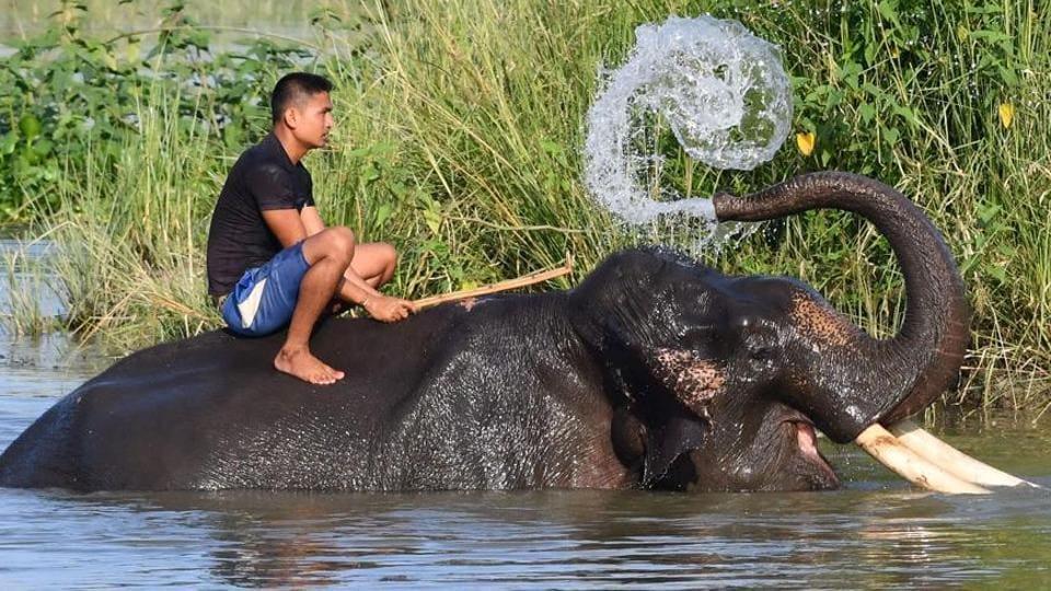 Karnataka's unique biodiversity hotspot with an array of threatened species.