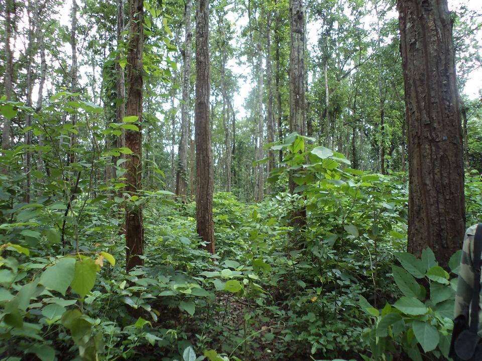 Madhya Pradesh,Forest,tribals