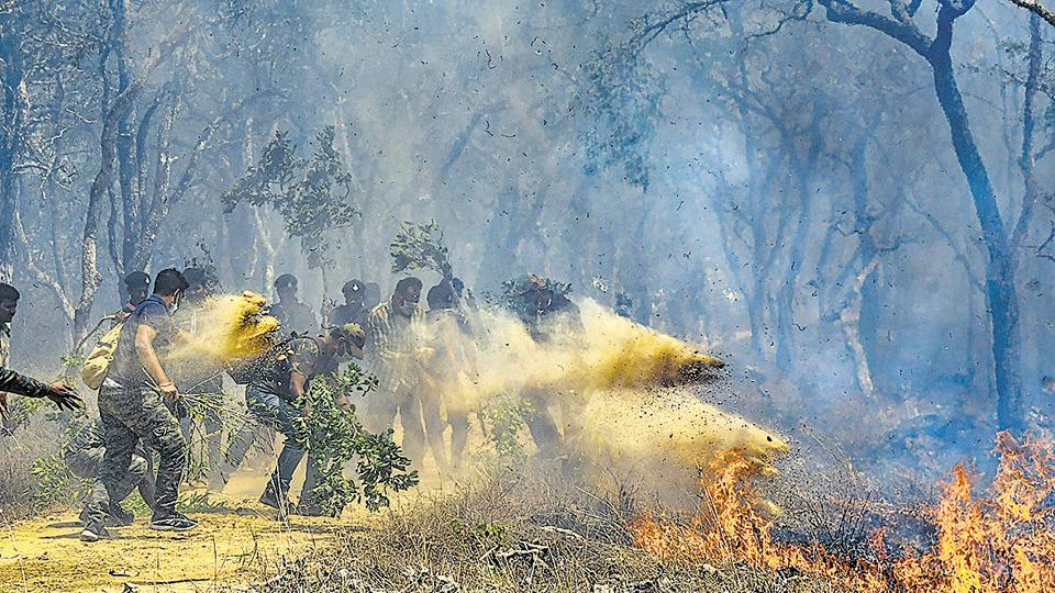 Thousands of hectares of some of the best tiger habitat have  been burnt down and, with it, hundreds of birds, smaller mammals and the young of both tigers, leopards and so many other animals have either been displaced or burnt to cinders