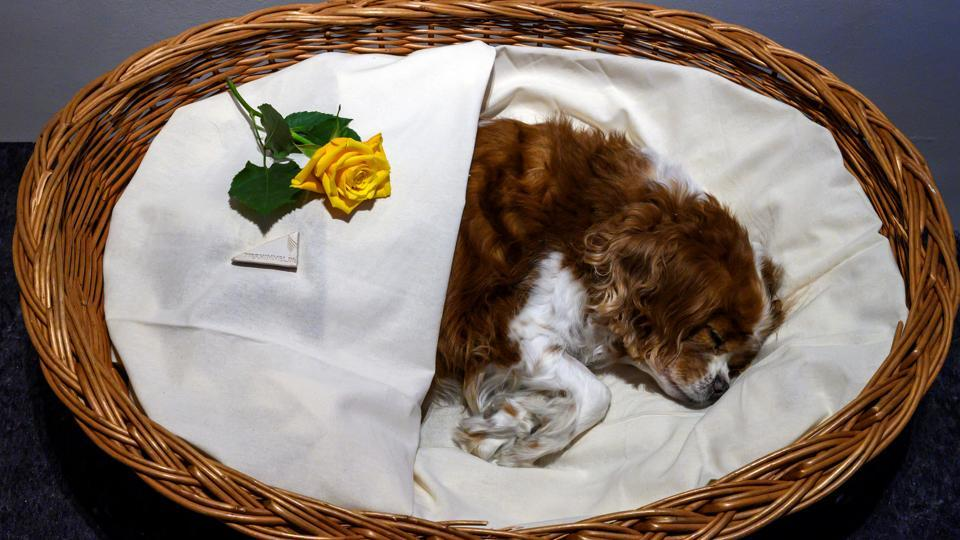 """A deceased pet dog lies """"in state"""" before being cremated at the Tierhimmel (Animal Heaven) crematorium and pet cemetery in Teltow, just outside Berlin. """"We cried for days on end,"""" Hendrichs said, recalling the death of his faithful friend more than 15 years ago and its sad end that prompted him to set up a cemetery for pets south of Berlin. (John MacDougall / AFP)"""