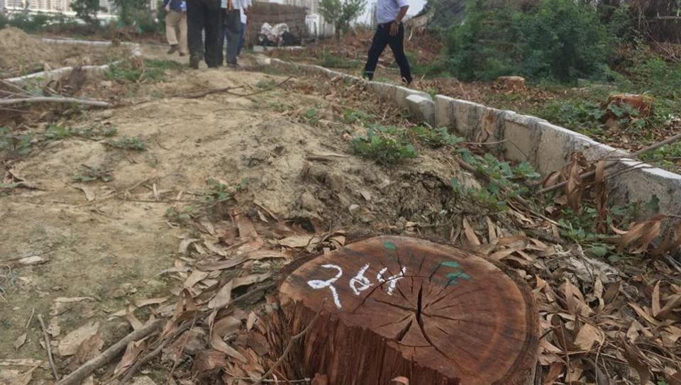 GMDA,tree felling,PLPA amendment bill