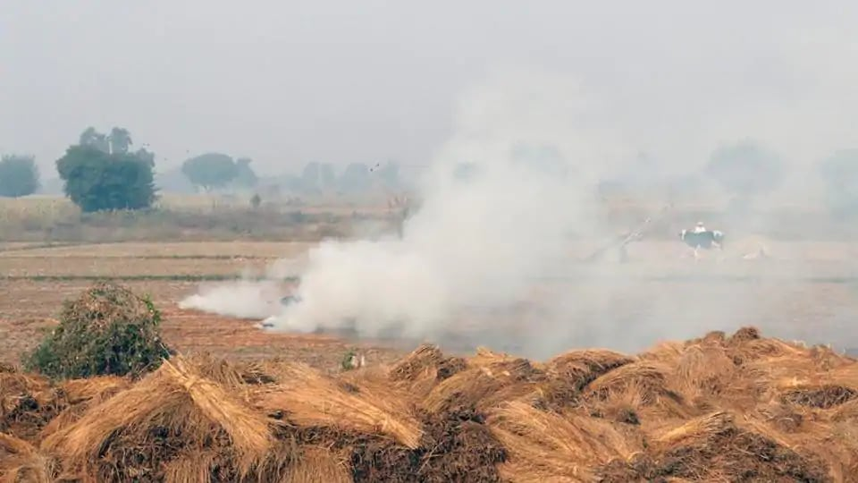 Stubble burning cost $150 billion in 5 years: Study