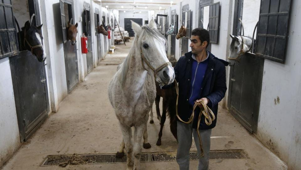 "Sharida even remembers delivering Karen. But he lost sight of her after she was stolen from her stable in Eastern Ghouta in 2012, the same year rebels overran the region. Sharida had long fled his home region but returned to search for missing Arabian horses and immediately recognised Karen. ""I was so shocked,"" he said. ""She was all skin and bones, and could barely stand up."" (Louai Beshara / AFP)"