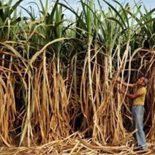 Uttarakhand boy's body was found inside a sugarcane field in Haridwar