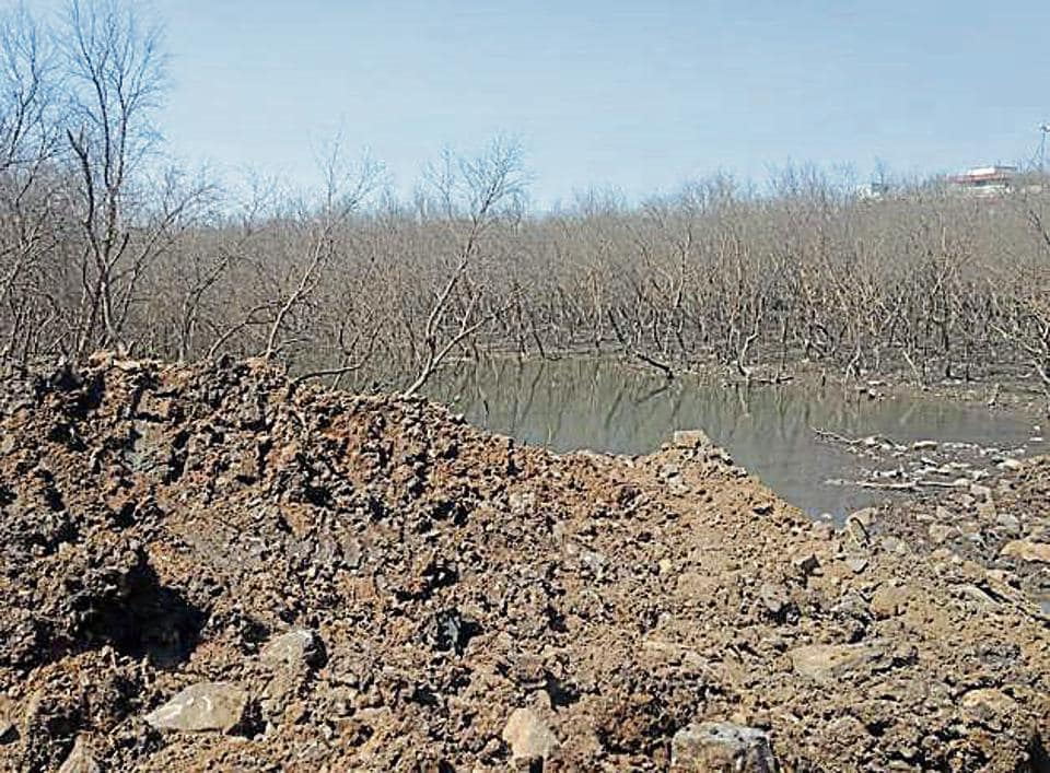 The patch of mangrove at CSF Punjab Warehouse dried as tidal water flow was stopped.