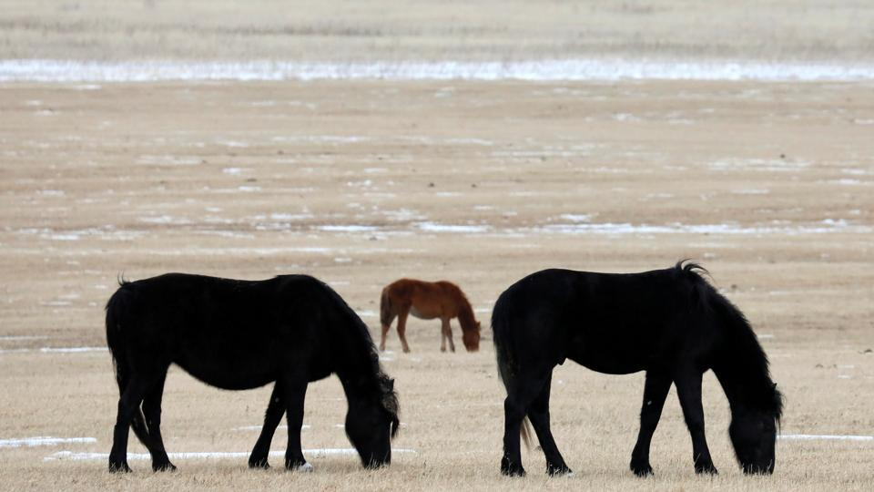 Horses graze in a field outside the Siberian village of Gladkovo southeast of Krasnoyarsk, Russia. (Ilya Naymushin / REUTERS)