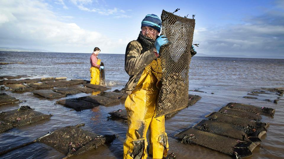 Farmers tend the oysters at William Lynch's Foylemore Oysters farm in Lough Foyle in County Donegal, Ireland. For 20 years, William Lynch has farmed oysters in disputed waters along the Irish border. With Brexit looming, a convenient grey area which has allowed him to flourish could be coming to an end. (Paul Faith / AFP)