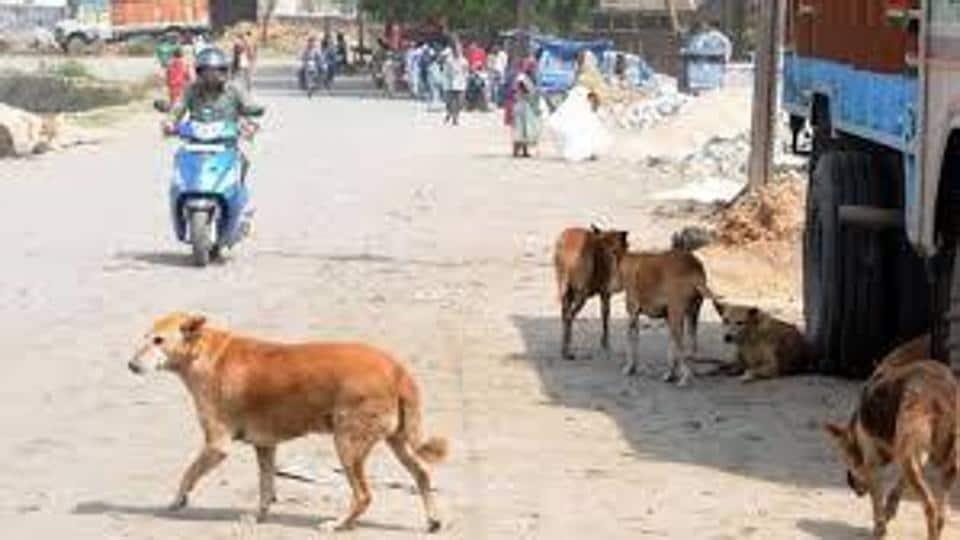 Zirakpur,dog bite incidents,punjab
