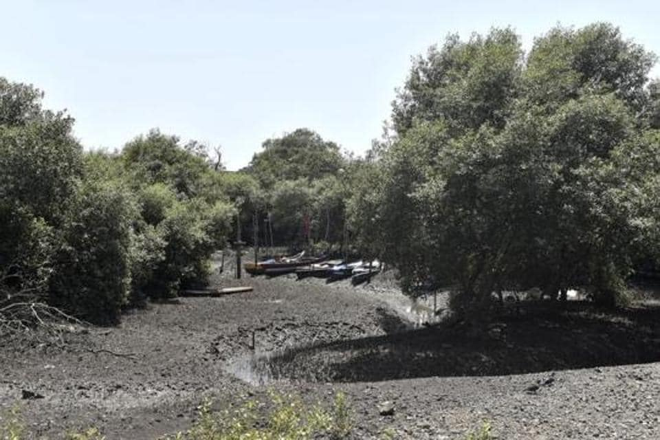 Over 50,000 mangroves trees to be cut for bullet train project, HCtold