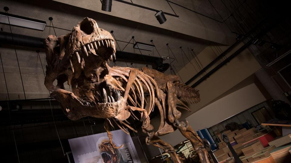 University of Alberta discovers world's biggest Tyrannosaurus rex