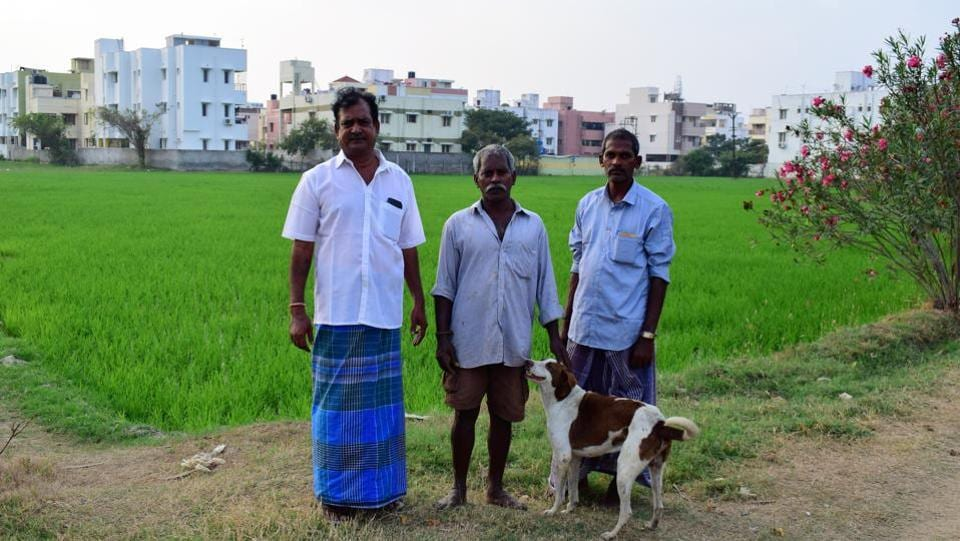 MS Ravi (L) is one of the natives of the original Chennai, a sixth-generation resident farmer in perhaps one of the last of Chennai's traditional farms in Manapakkam. However, urea and farmer's benefits are not available within urban city limits and Ravi doesn't qualify for compensation for farming. Eventually, the isolated farmer or protector of water bodies, no matter how vital his role, cannot hold on to the water alone in the metropolis. (Gayatri Jayaraman / HT Photo)