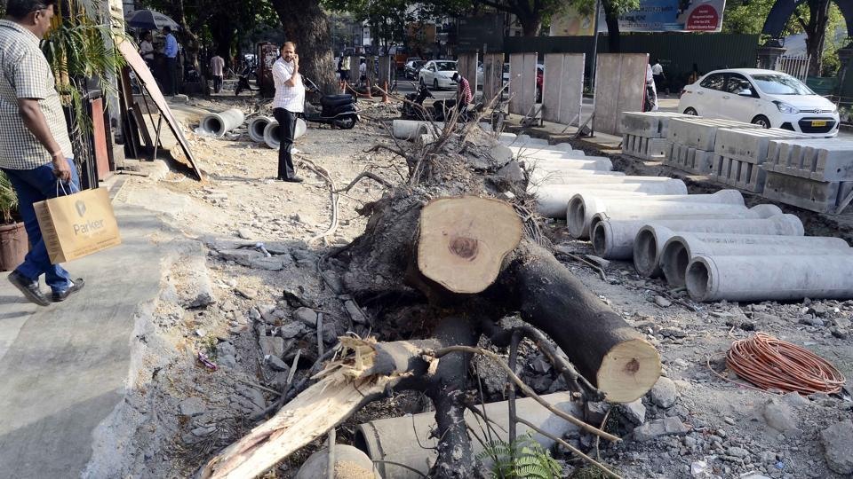 The yellow flame tree on FC road collapsed due to digging carried out by civic contractors on Monday.