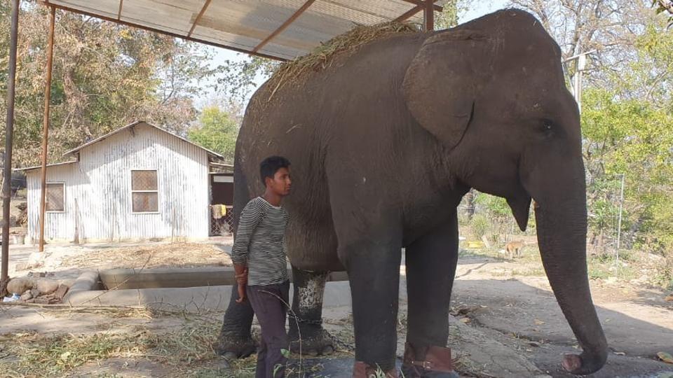 dehradun,nainital HC,lakshmi uttarakhand elephant
