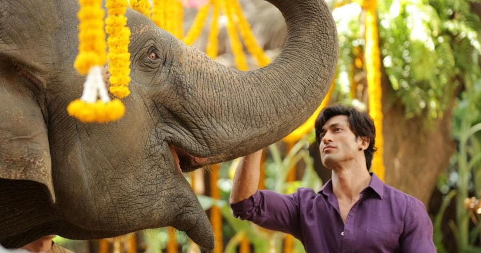 Vidyut Jamwal's Junglee is an action film about a man and his love for animals.