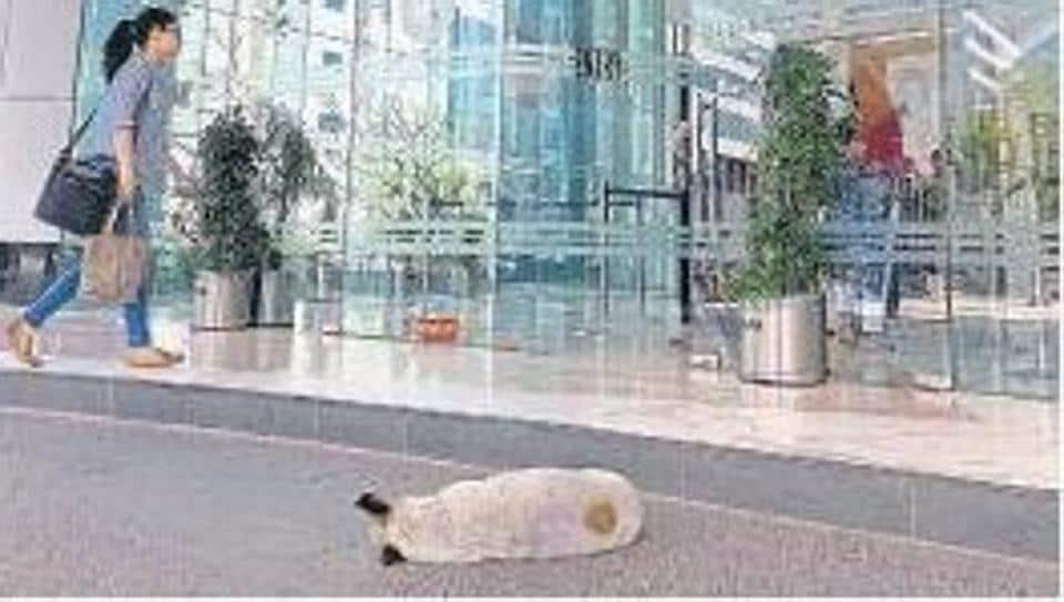 A dog snoozing outside one of the grand lobbies in Gurugram's CyberCity.