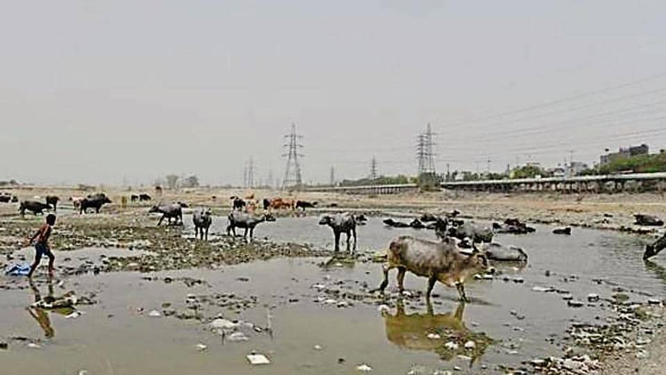 Ghonda Gujran, where the processing plant is coming up, is in the 'O Zone' or the Yamuna riverfront.