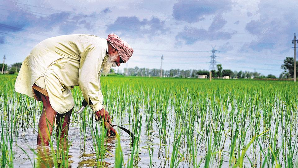 Data from the district agriculture department reveals that 119 farmers committed suicide in Sangrur between April 2017 and March 2018.