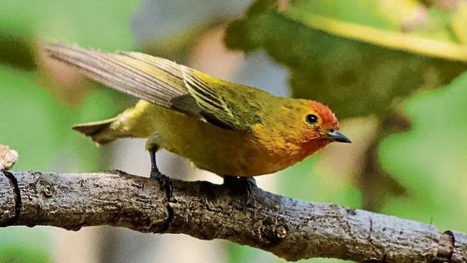 Himalayan bird seen in Gurugram 40 years after rare sighting in Delhi area