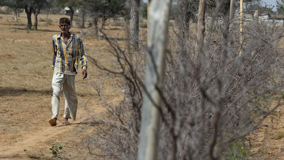 A farmer walks besides a fence put up to keep stray cattle out. Ahead of elections beginning April 11, one Hindu farmer Raghuvir Singh Meena said that the government is playing their politics; they don't care about poor farmers. Critics warn that the BJP has emboldened fringe Hindu vigilante groups to attack minority Muslims and low-caste Dalits with impunity for eating beef, slaughtering and trading in cattle. (Abhaya Srivastava / AFP)
